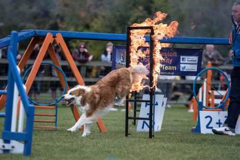 Lowestoft Dog Agility display at the Falconry & Countryside Show, Stonham Barns, Suffolk