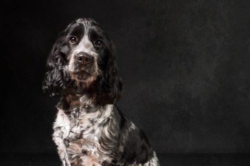 Photograph taken by Ipswich pet photographer