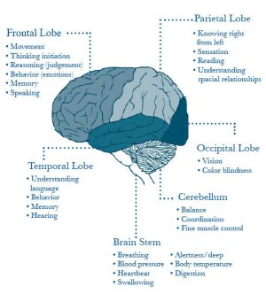 English 333 Theories of Mind