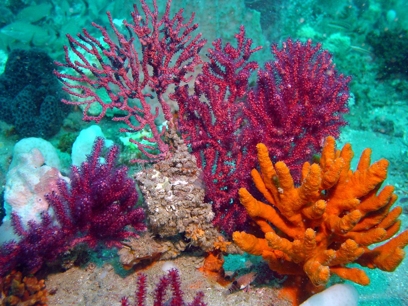 Upcoming Fishinars Lionfish South Atlantic States