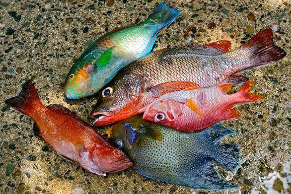 Catching Aquarium Fish In Florida   Allcanwear org