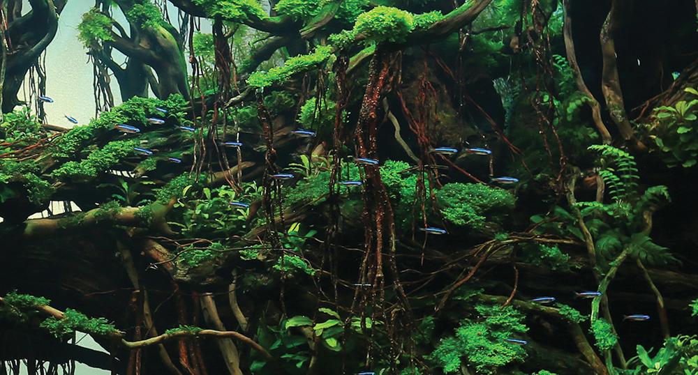 Aquarium Plants Montreal