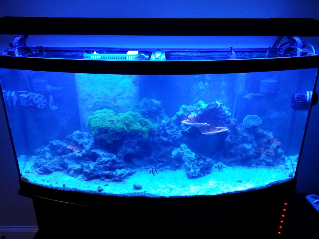 SALE 72g Bowfront Aquarium Reef Tank With Stand Equipment Amp Fish 2000 OBO West Knoxville