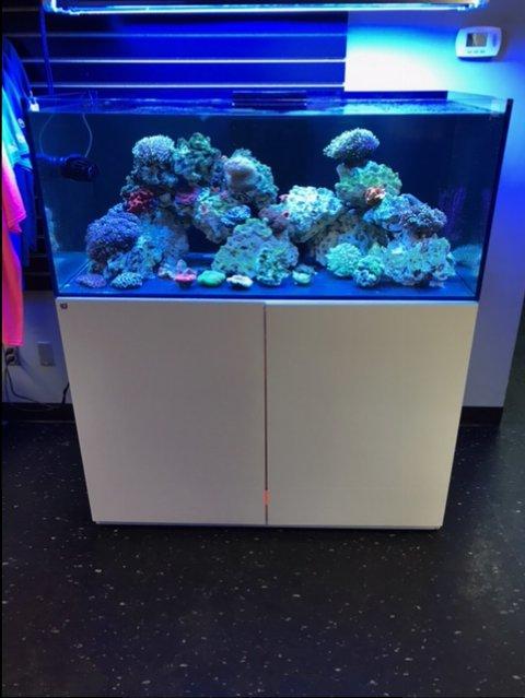 reef rack waterbox reef2reef