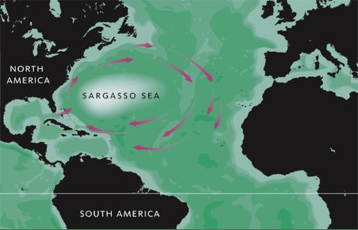 Mar dei Sargassi - https://it.wikipedia.org/wiki/Mar_dei_Sargassi