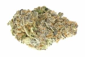 Mimosa Bud