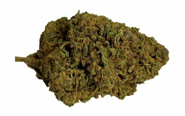 Cannabis Cannatonic Bud