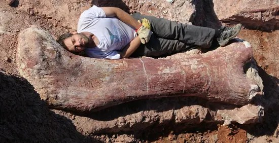 Scientist lays next to the thigh bone of the world's largest dinosaur