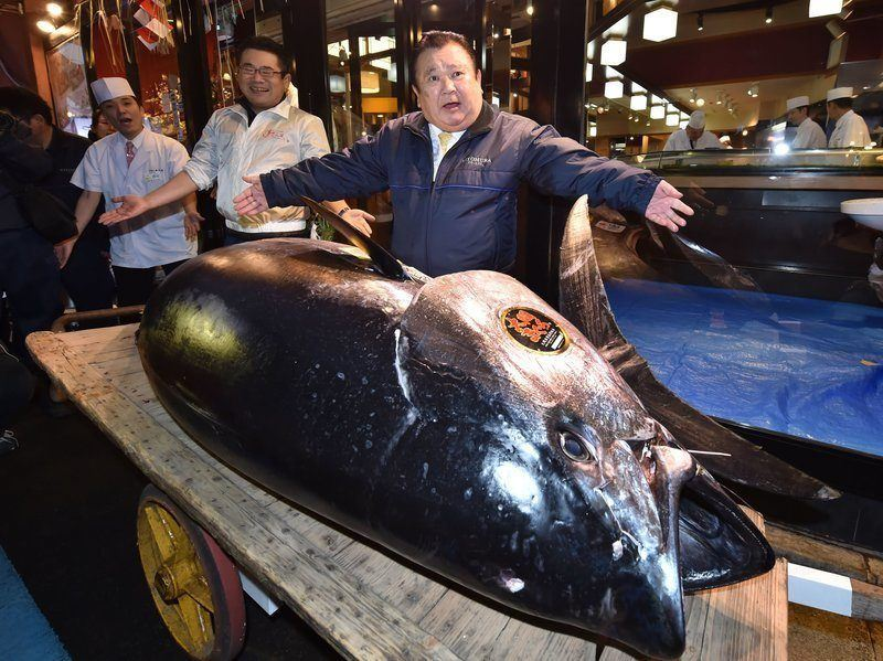 $3.7 million bluefin