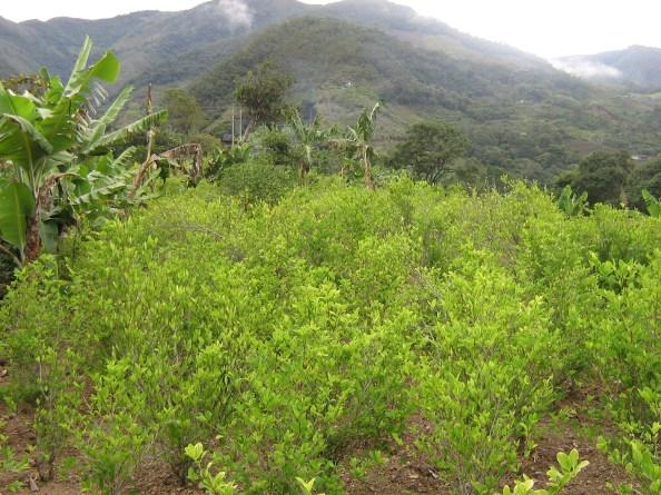 Paisajes-Cultivos, 2011 Fotografía