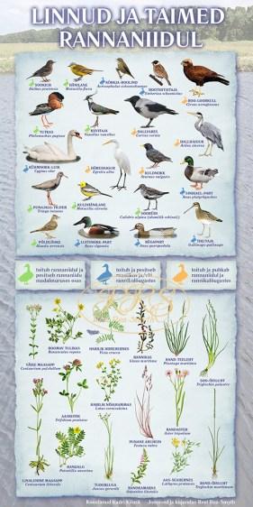 Linnud ja taimed rannaniidul