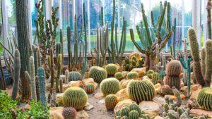 Different types of cactuses in Geneva botanical garden