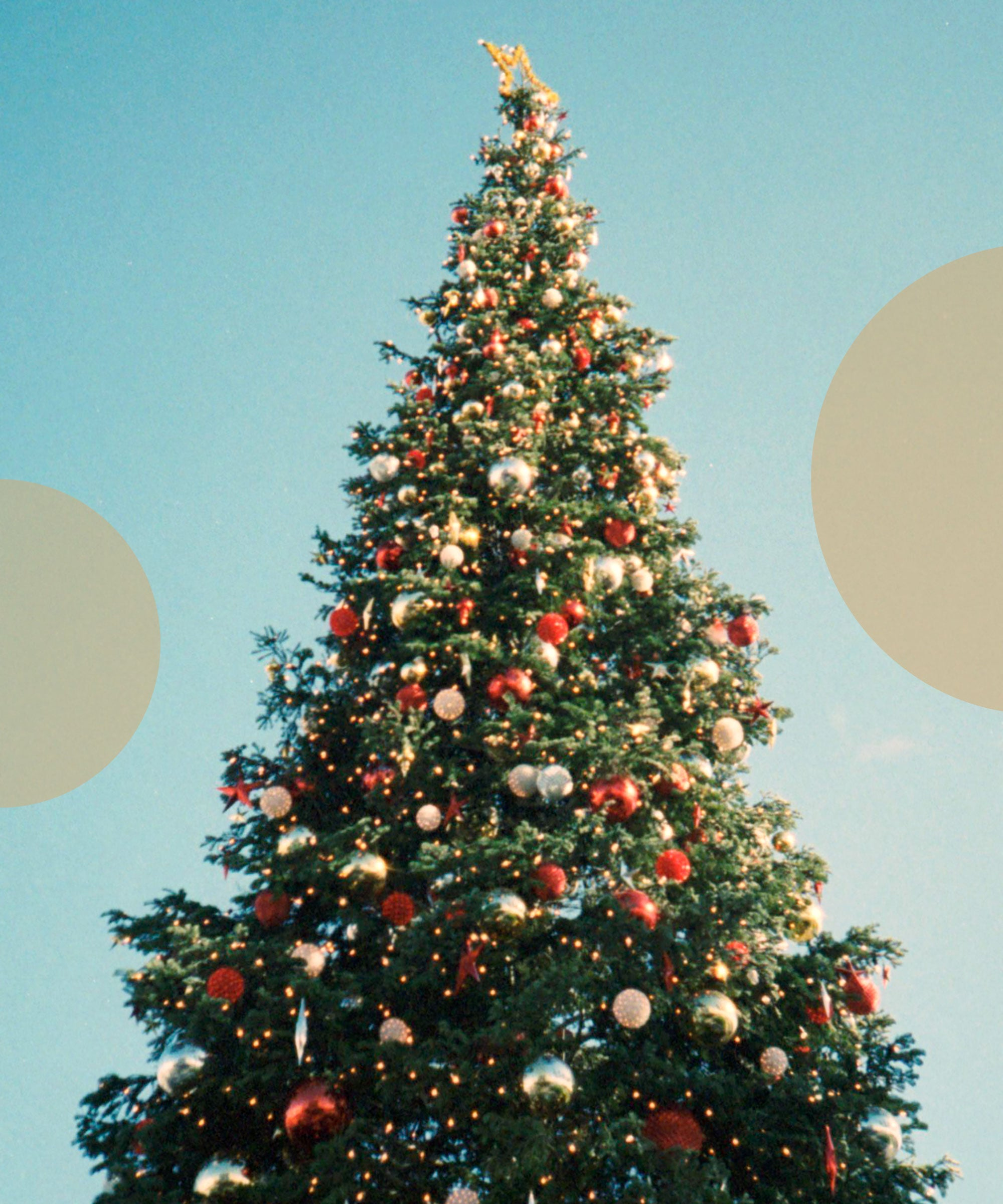 Christmas Tree Shortage 2019 Due To Climate Change