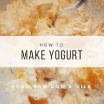 How to Make Yogurt from Raw Cow's Milk