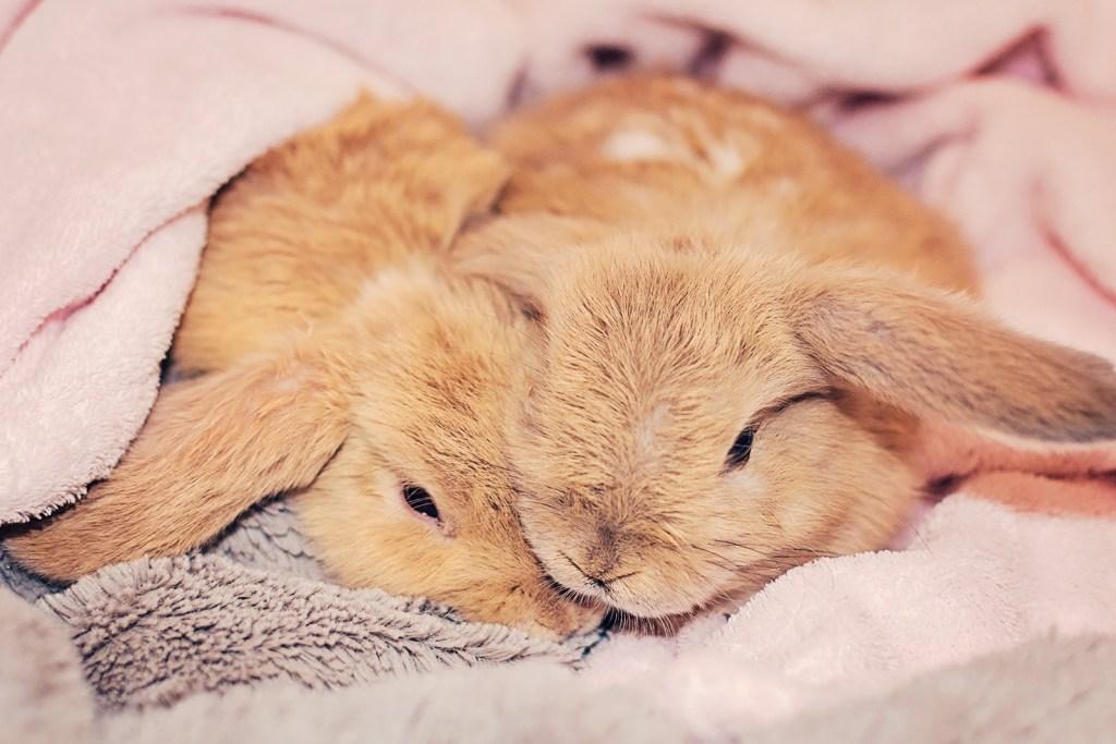 new-bunnys1