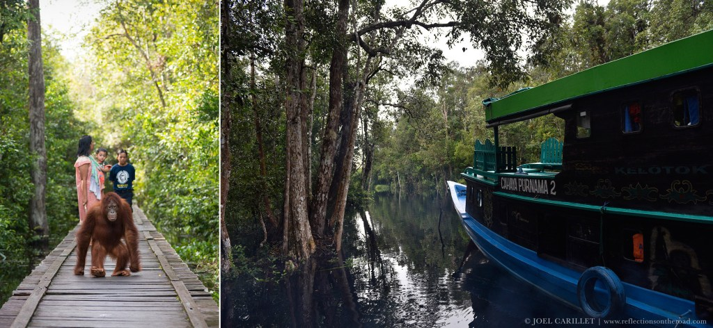 Tanjung Puting National Park in Kalimantan, Indonesia