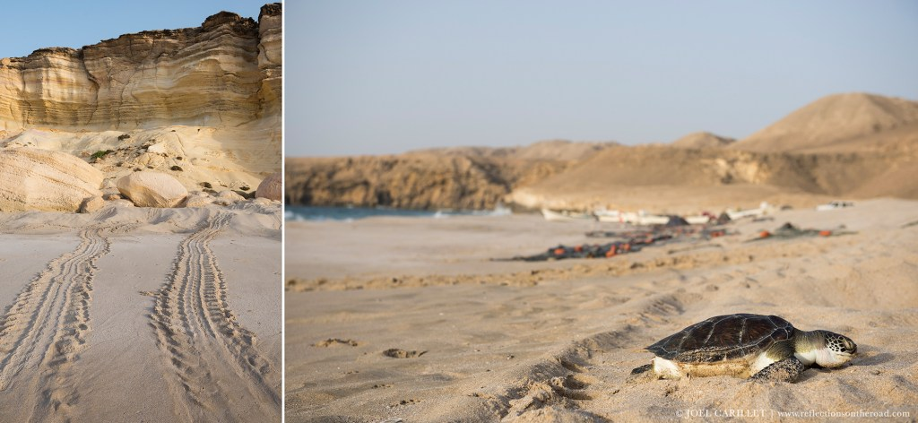 Ras al-Jinz turtle reserve in Oman