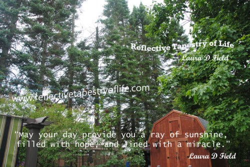 """May your day provide you a ray of sunshine, filled with hope, and lined with a miracle."" ~ Laura D. Field ~"