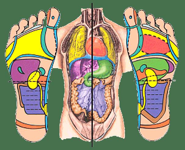 Les zones des pieds en corrélation avec le corps