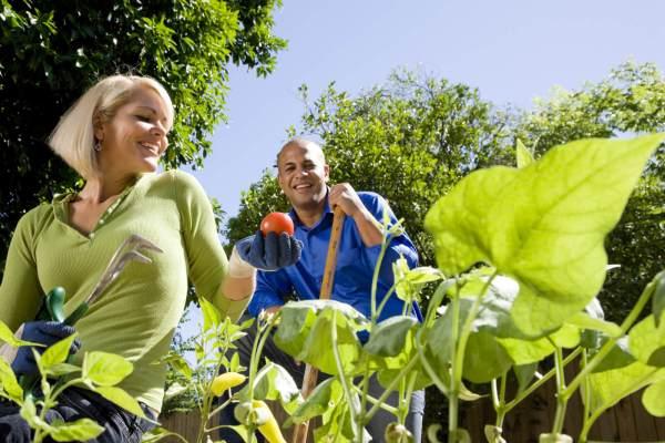bank holiday gardening guide