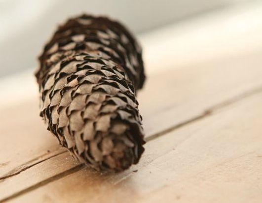 Dieses ist der Zapfen eines Fichtenbaums und ebenfalls fibonaccimäßig geformt