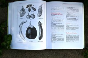 Sortenvielfalt, die man selber ziehen will: Beispiel Eierfrucht