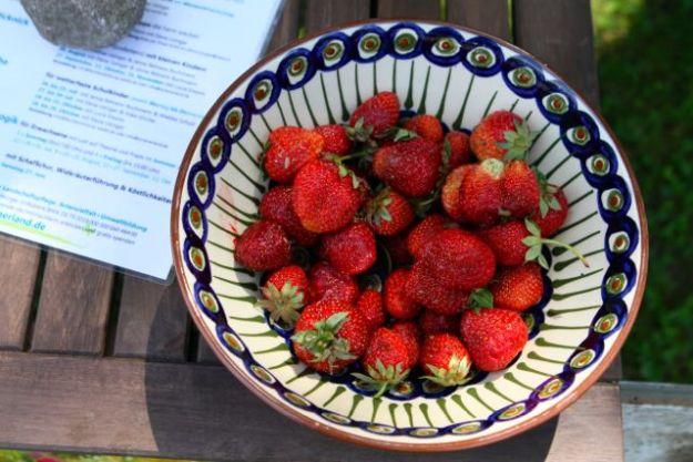 Erdbeeren aus eigener Ernte - am selben Tag gepflückt