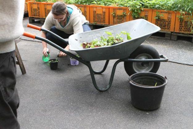 Gartendecklerin bei der Arbeit
