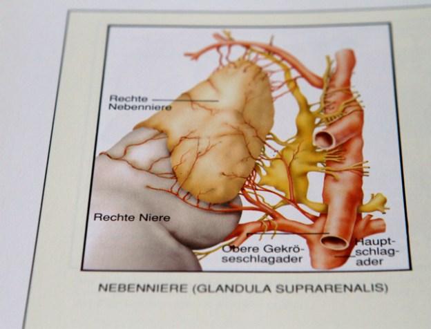 Liegt Adrenal Fatigue - die Erschöpfung der Nebennieren - Burnout und Depressionen zugrunde?