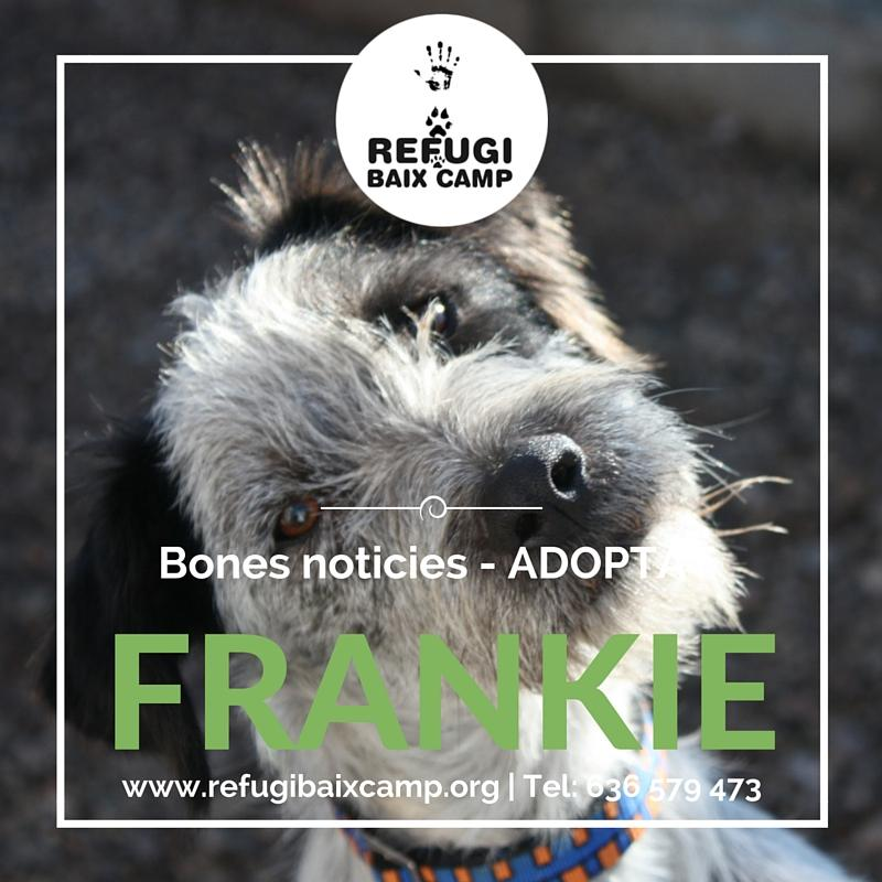 Frankie Adoptat