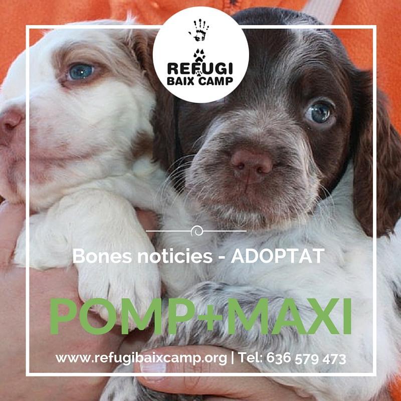 Pomp I Maxi Adoptat