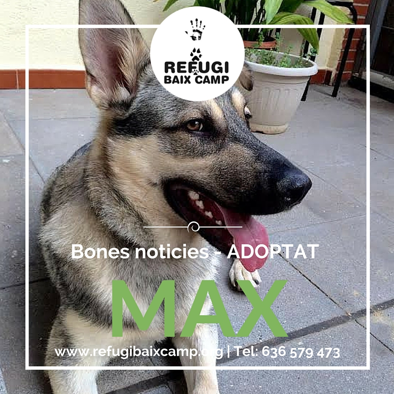 Max Adoptat