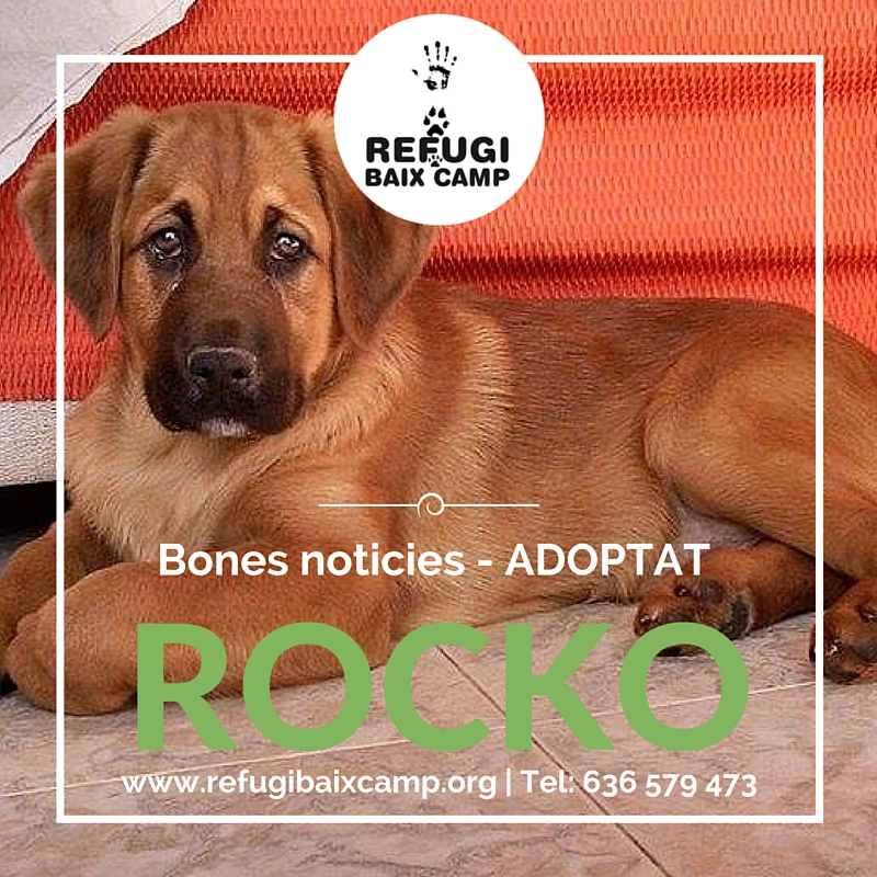 Rocko Adoptat