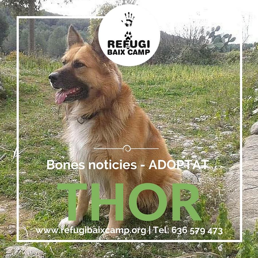 Thor Adoptat