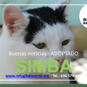 SIMBA ADOPTADO