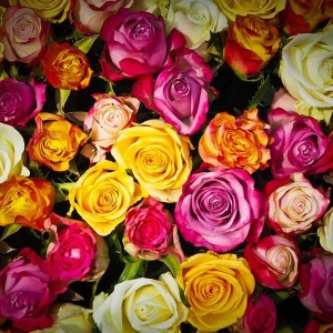 50 stems of different colors of roses