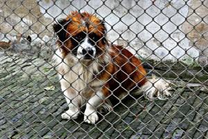 cucciolo in canile donazione per animali