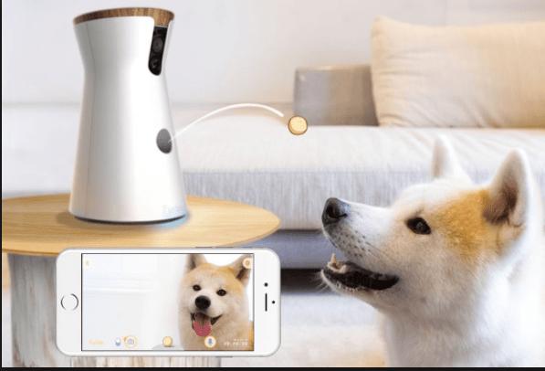 Furgo Dog Camera: Camara de vigilancia para interatuar con tu perro
