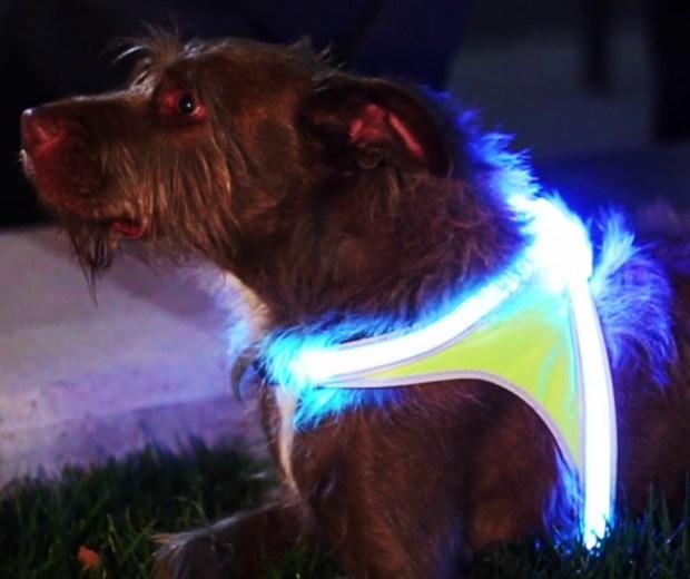 Chaleco reflectante para perros, arnes led para perros