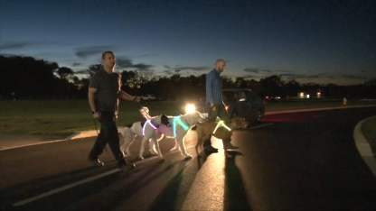 Arnes led para perros