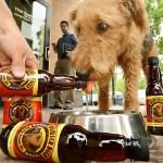 cerveza para perros beer bowser