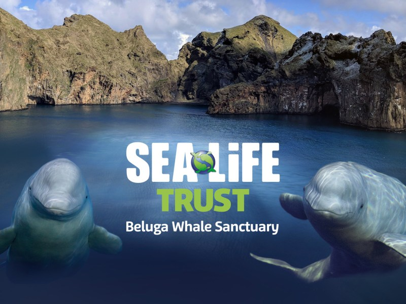 Olympus sponsorship with the Sea Life Trust