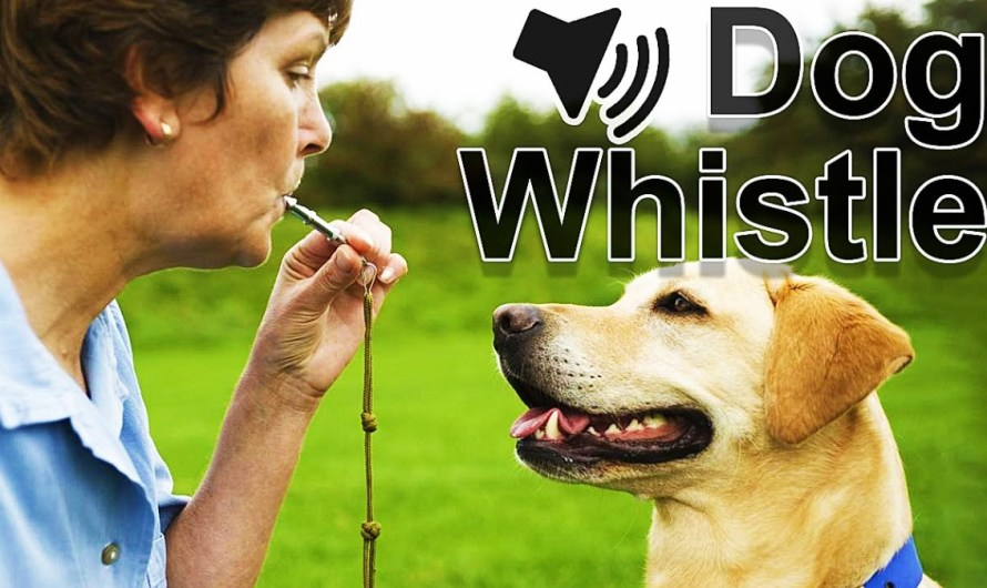 9 Best Dog Whistle Apps for Android and iOS