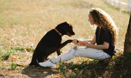 Best Dog Training Apps