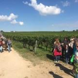 Kulinarische Weinwanderung Freinsheim