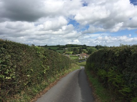 Castleblayney Hedgerow