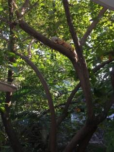 Iguana at the River Café