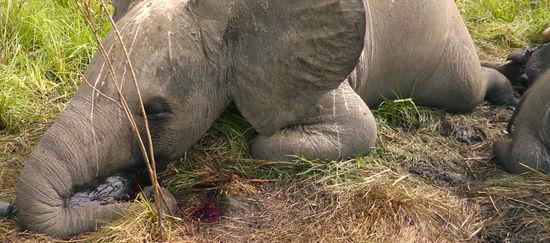 https://i2.wp.com/www.regenwald.org/uploads/photos/teaser_newsletter/elefant-wilderei.jpg
