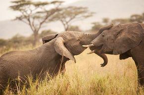 https://i2.wp.com/www.regenwald.org/uploads/photos/teaser_newsletter_small/tanzania-elefanten-afrika.jpg?resize=290%2C192