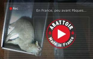 Une vie de cochon Abattoir-mauleons-l214